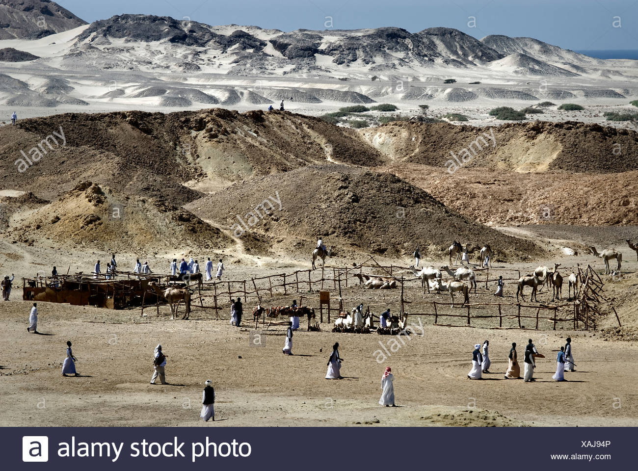 Egyptian Bedouins meeting in Wadi el Gamal National Park, Valley of the Camels, for the Bedouin Cultural Festival - Stock Image