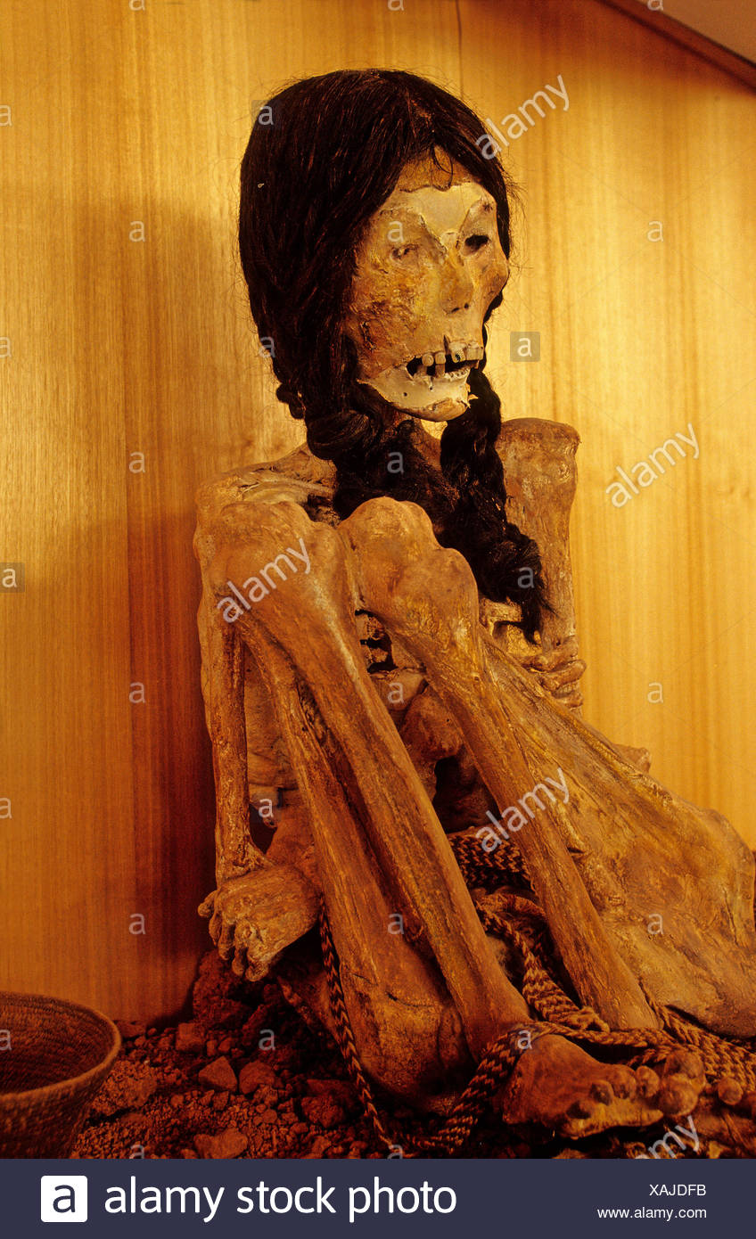 Atacama Desert Desert Mummy archaeology Miss Chile Museo Arquelogico Northern Chile Chile South America Ame - Stock Image