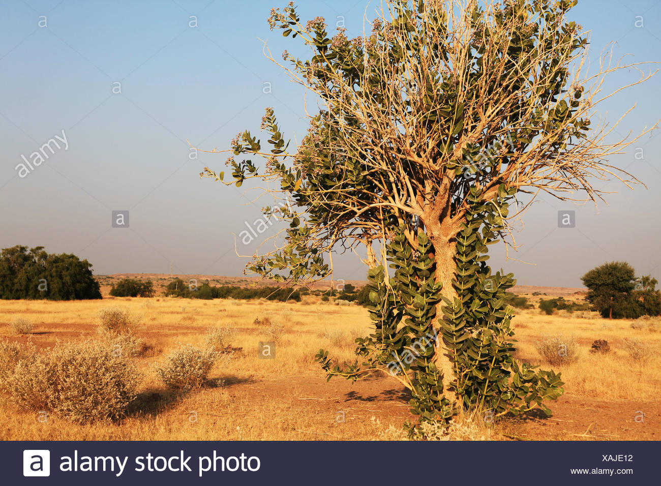 desert, wasteland, drought, water shortage, drought, deserted, water shortage, Stock Photo
