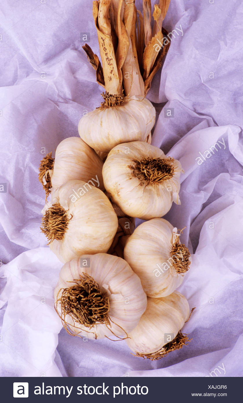 Garlic Solent Wight - Stock Image