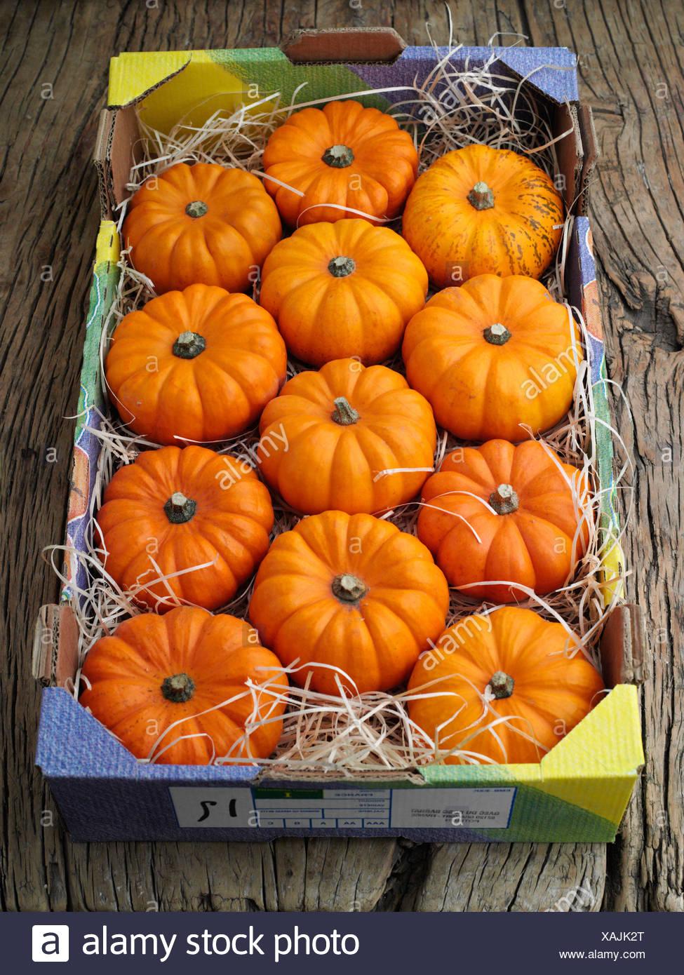 Box of Munchkin Pumpkins - Stock Image