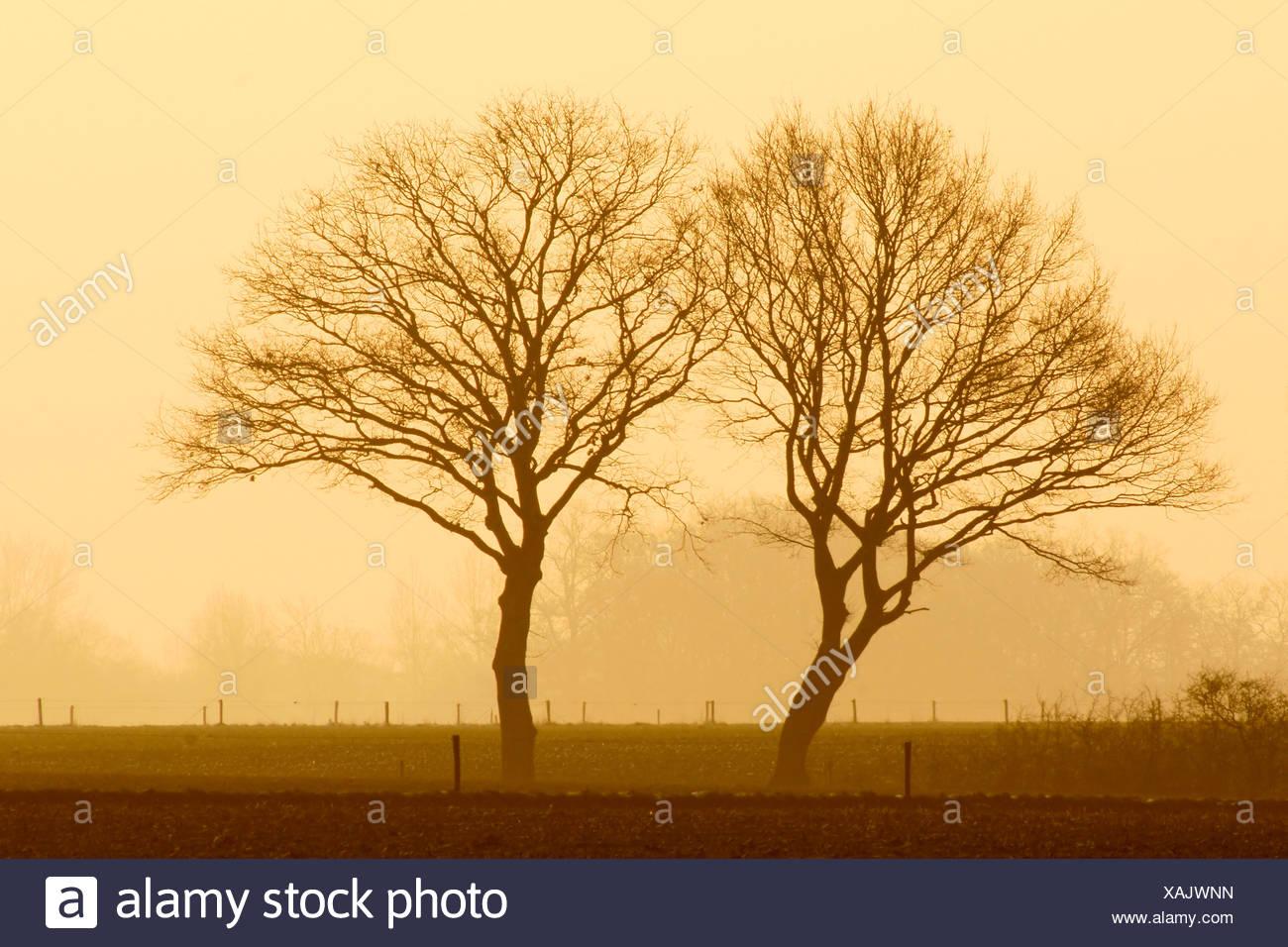 Twee bomen bij avondlicht aan de rand van een akker. - Stock Image