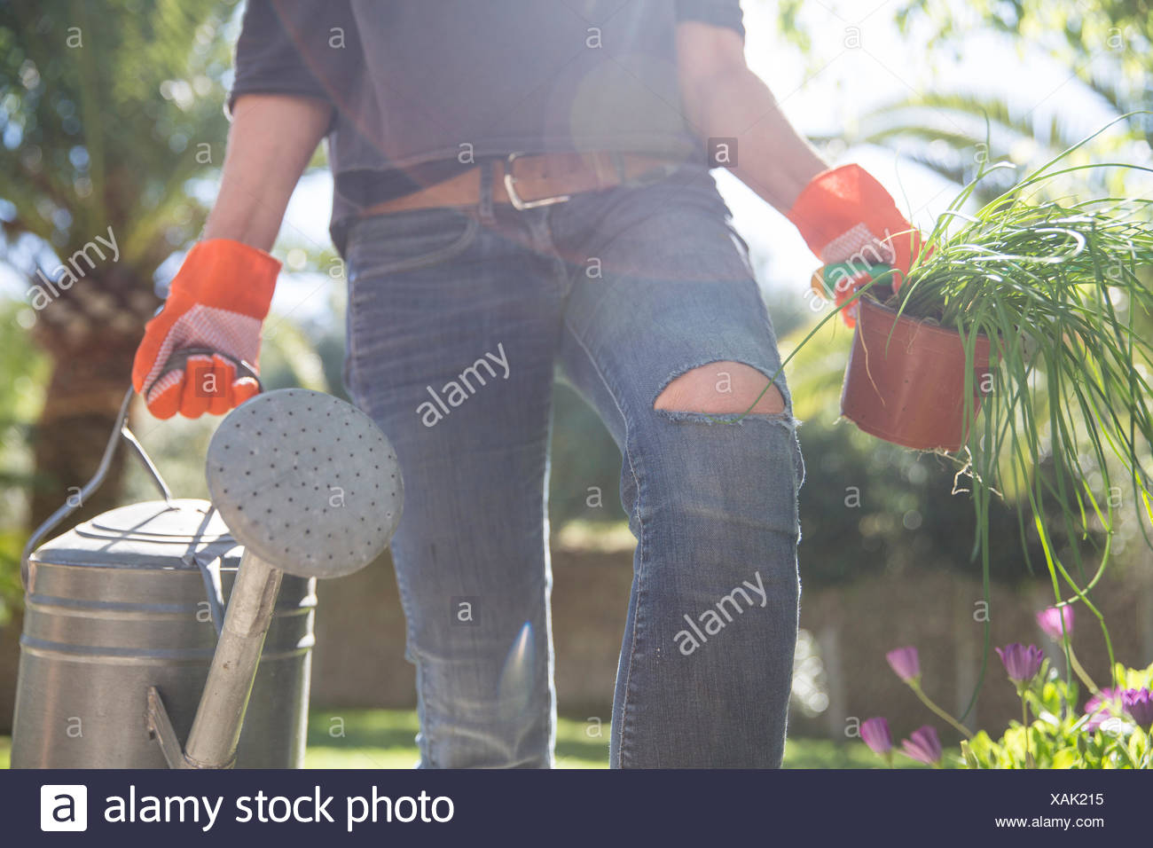 Woman carrying plant and watering can in garden - Stock Image