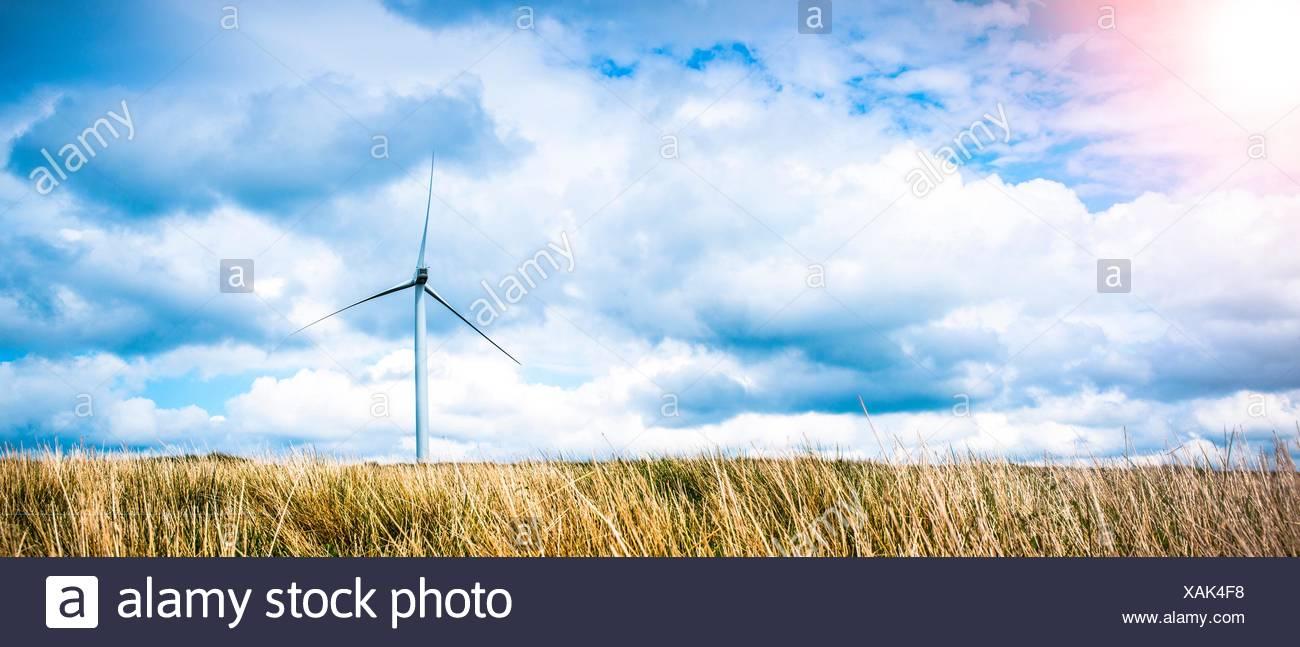 Panoramic view of long grass and wind turbine, UK - Stock Image