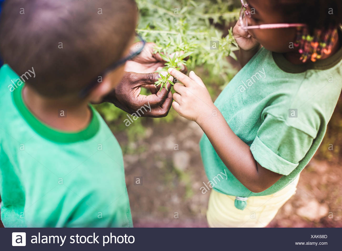 Fathers hands holding plants for son and daughter at forest eco camp - Stock Image