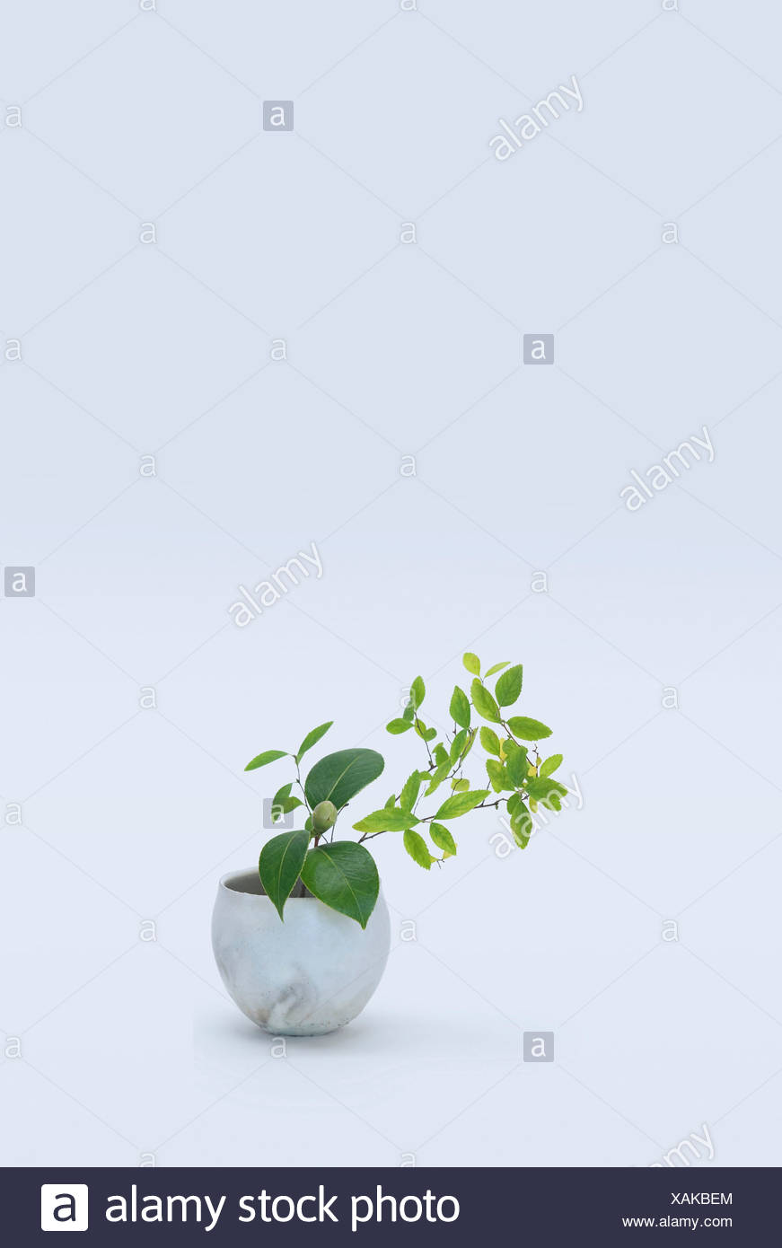 Varied stems with green leafs in vase - Stock Image