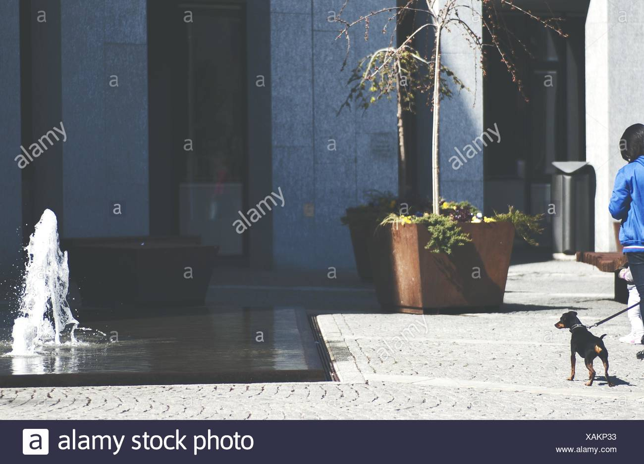 Doberman Pinscher Passing By Fountain - Stock Image