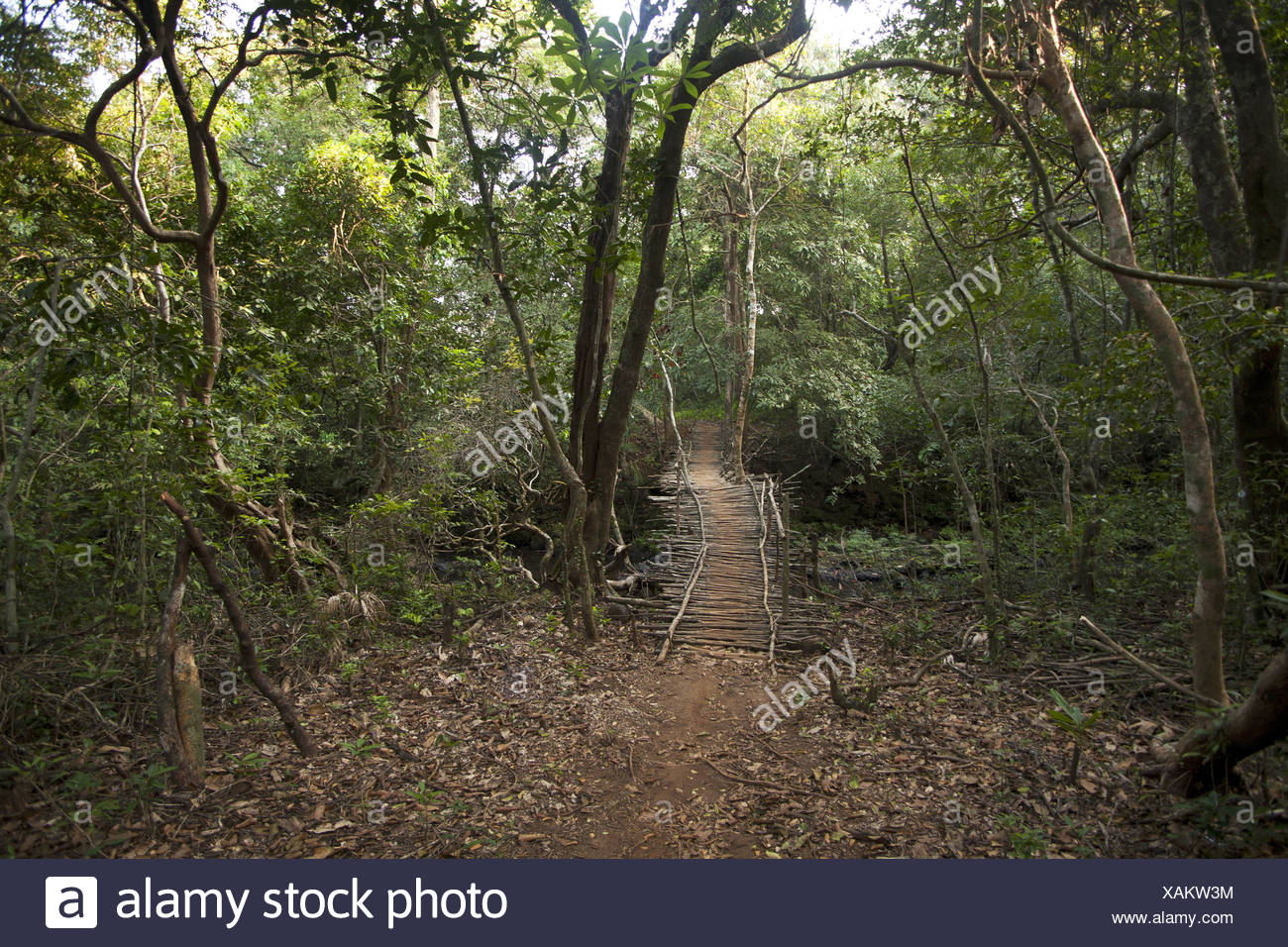 Forest path in Anshi tiger reserve area. Karnataka, India Stock Photo