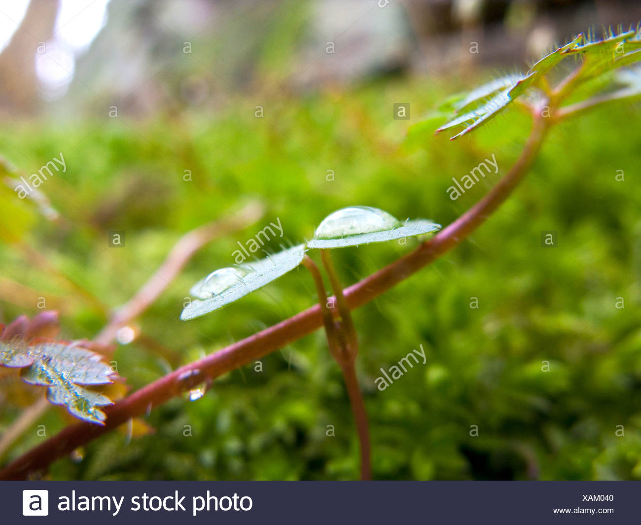 new seedlings growing though the undergrowth in spring Stock Photo