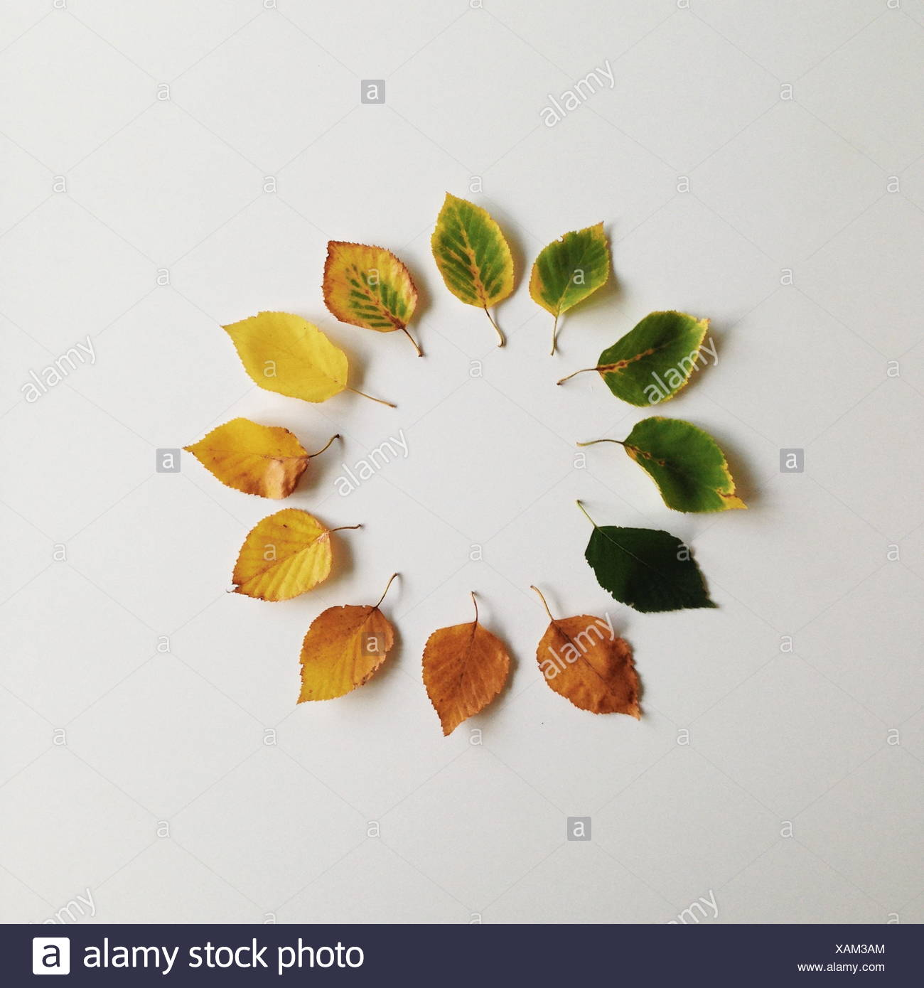 Autumn leaves in a circle - Stock Image