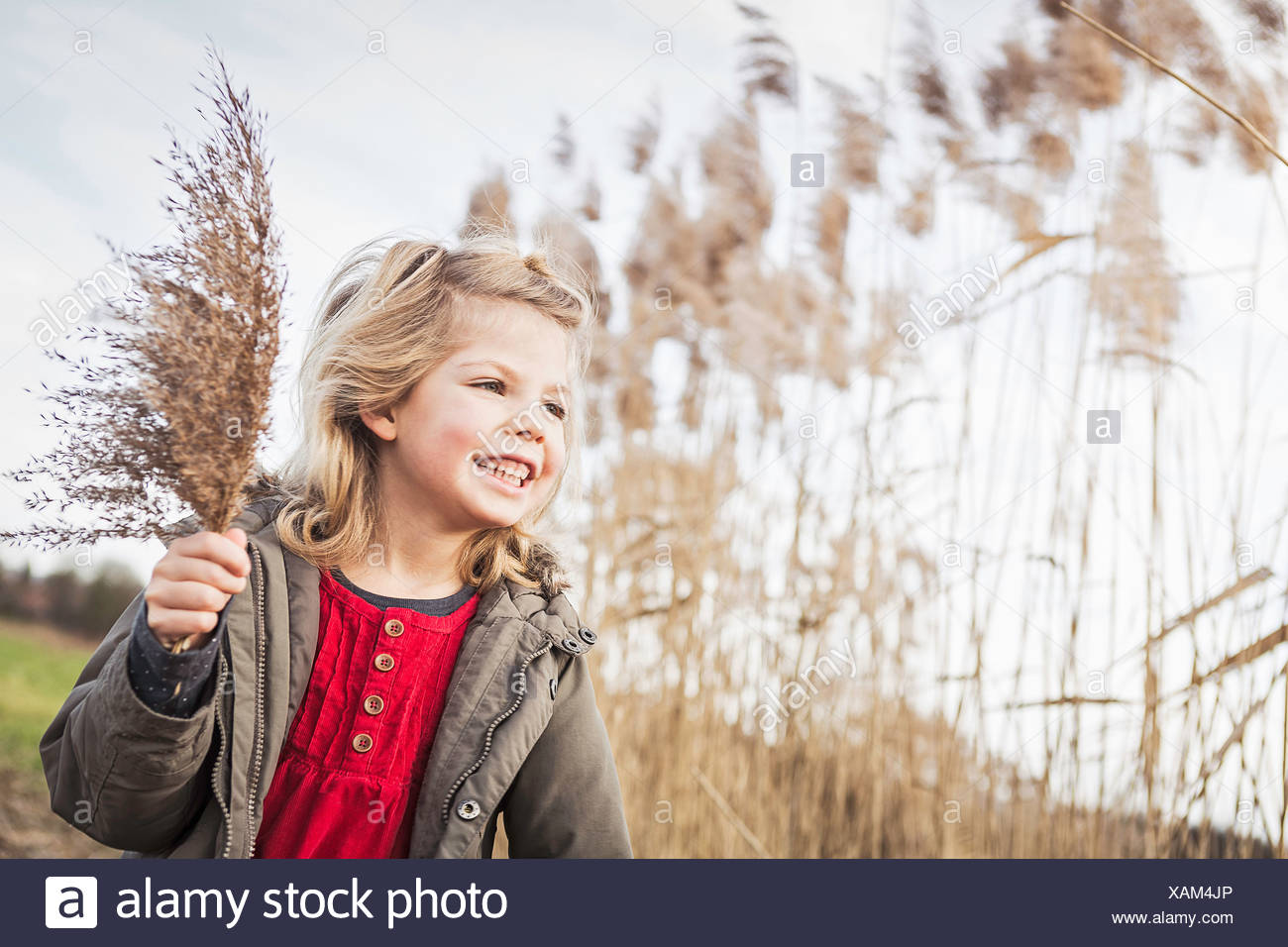 Young girl collecting marsh grasses - Stock Image