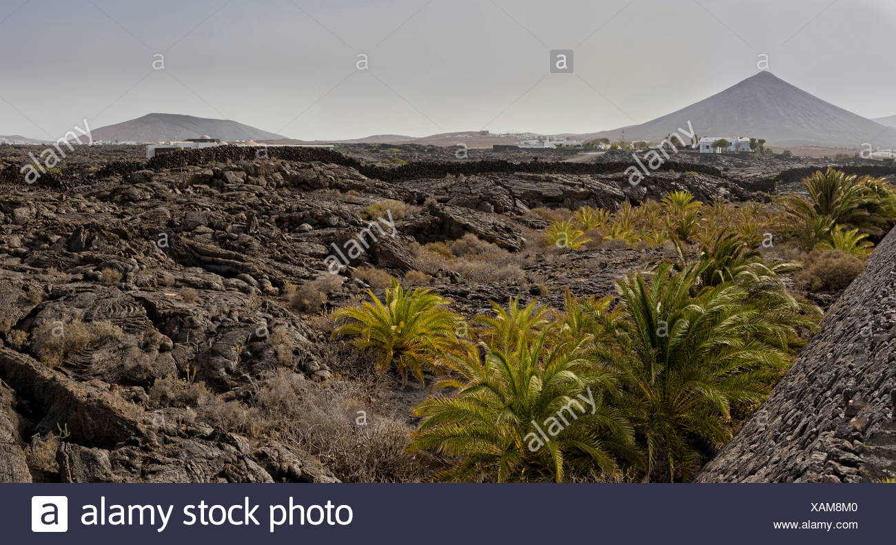 Spain, Lanzarote, Tahiche, Lava field, landscape, forest, wood, trees, summer, mountains, hills, Canary Islands, Stock Photo