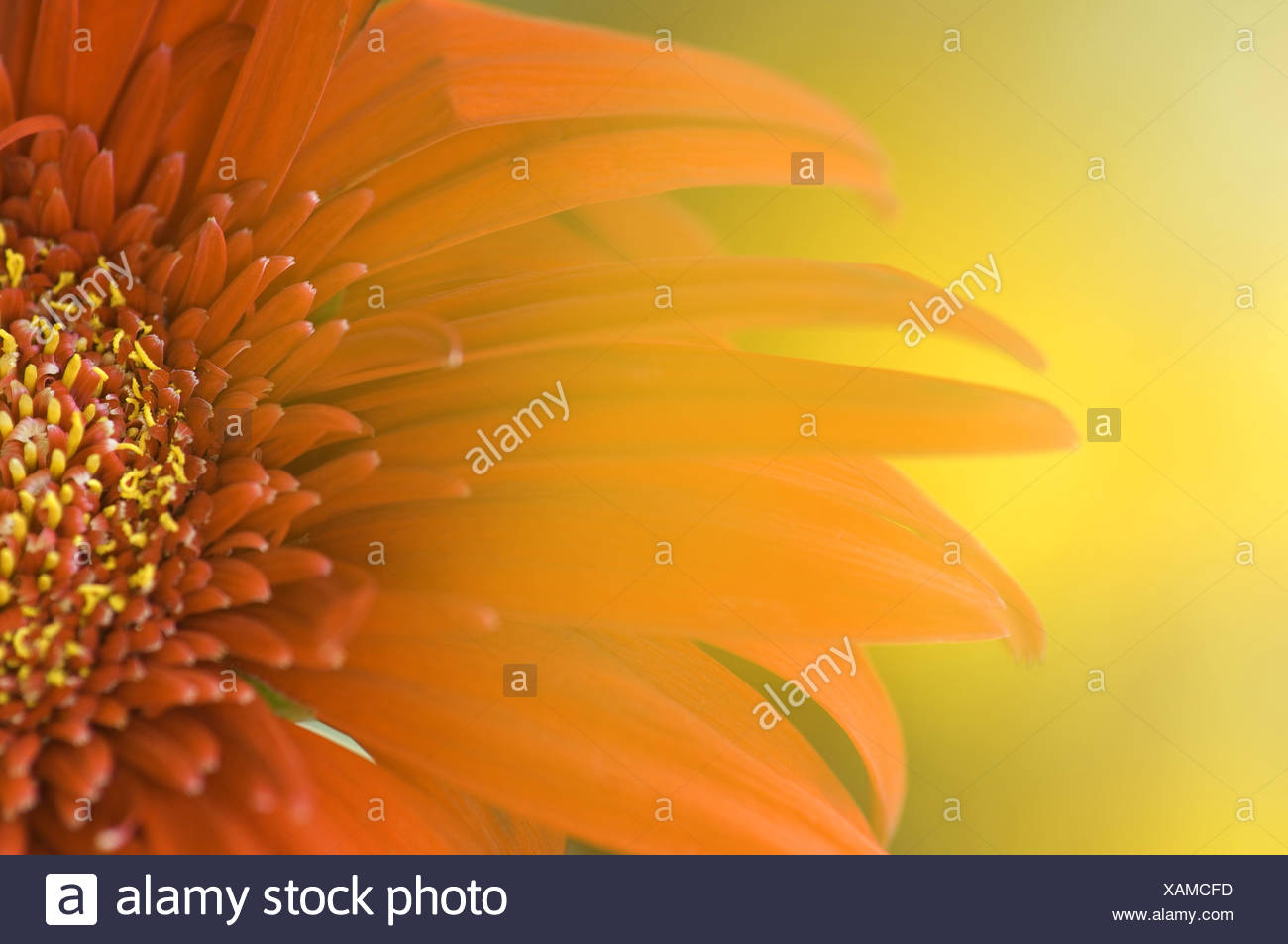 Detailed view of flower - Stock Image