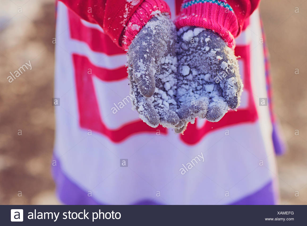 Girl holding out her snow covered gloves - Stock Image