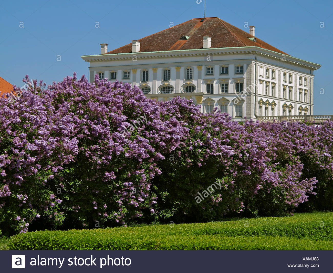 Nymphenburg Palace, Baroque, built in 1664-1703 by Agostino Barelli, Effner and Viscardi, large lilacs - Stock Image