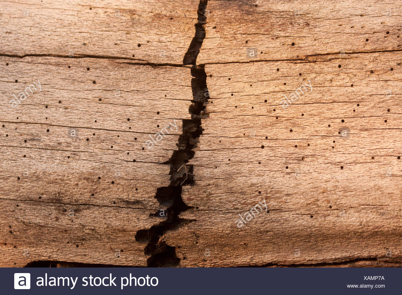 lazy, vein, grained, forest, nature, old, wood, lazy, vein, holes, rotten, - Stock Image