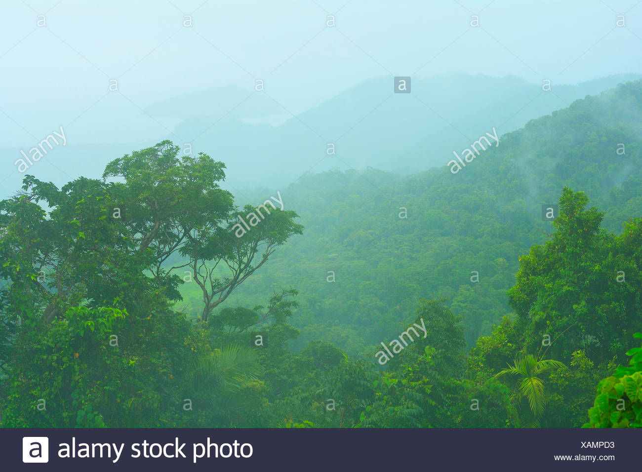 Landschaft entlang der Cape Tribulation Road, Daintree Regenwald, Australien, Queensland, Kimberley | Landscape at Cape Tribulat Stock Photo
