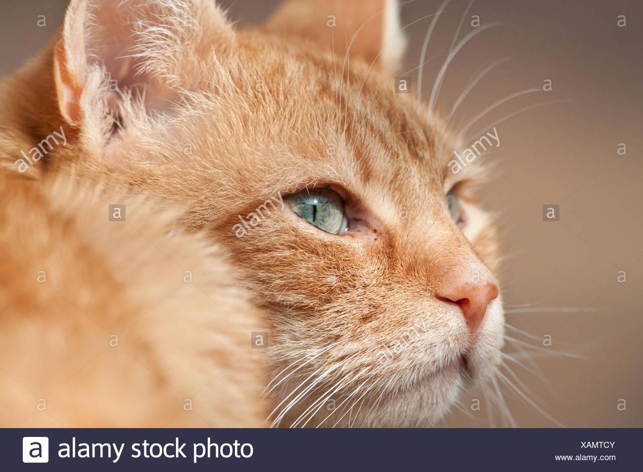 kater und katze