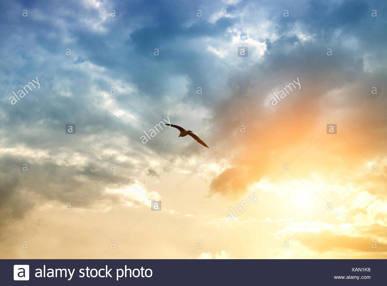 sky,flying,bird - Stock Image