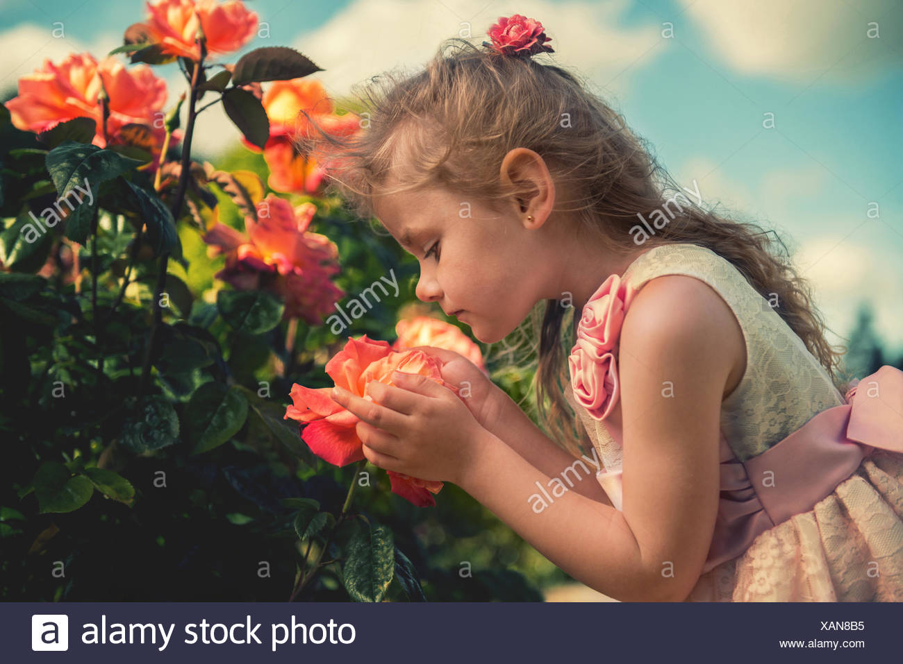 Girl (4-5) smelling flower - Stock Image