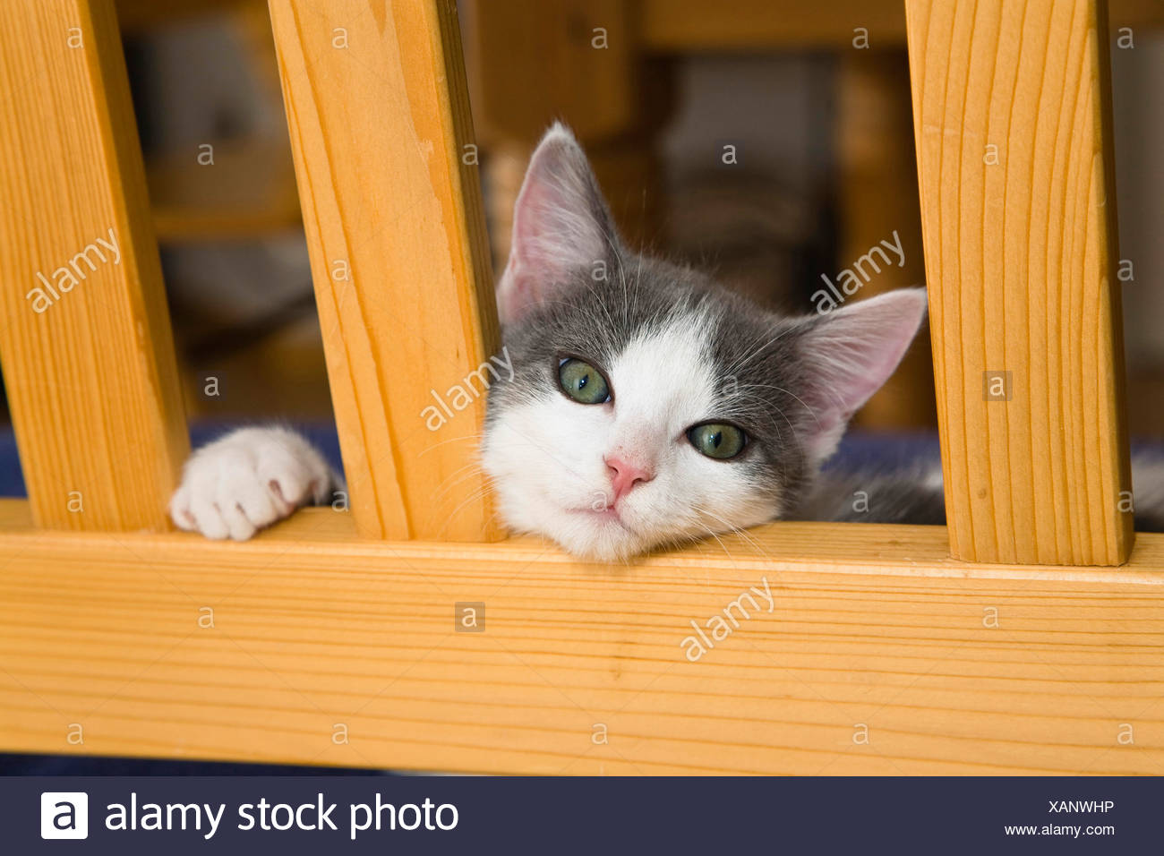 Weary Cat Stock Photos & Weary Cat Stock Images - Alamy