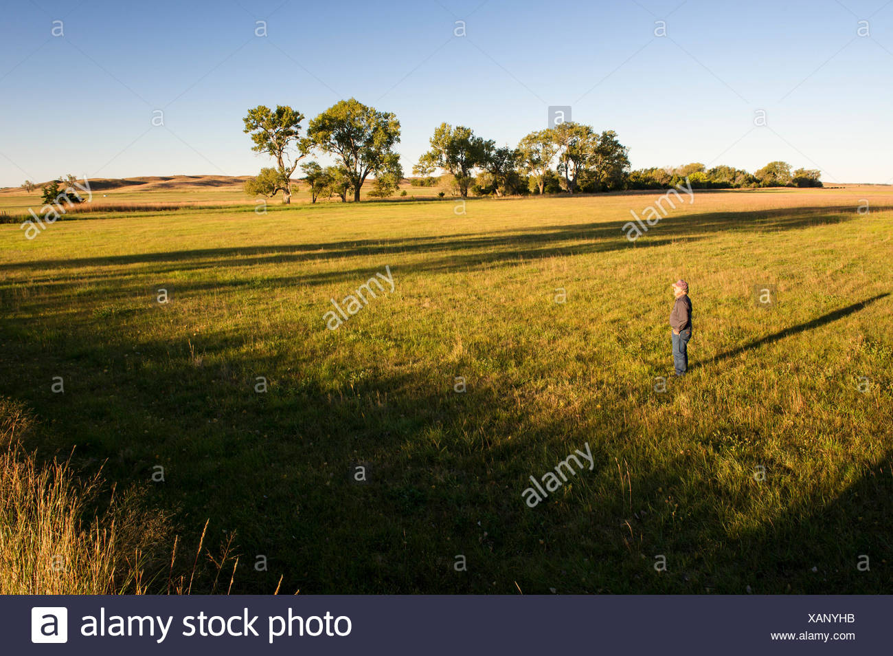 Lynn Ballagh looking out over his property, where the proposed NPPD power transmission line would pollute the landscape. Ballagh cattle ranch in the Sandhills of Nebraska, Garfield County, Nebraska, USA. - Stock Image