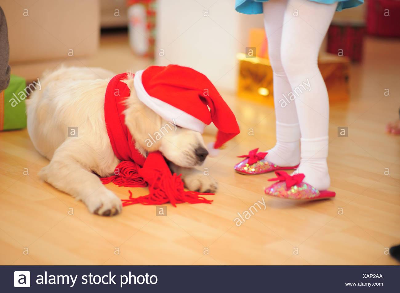 Christmas - Stock Image