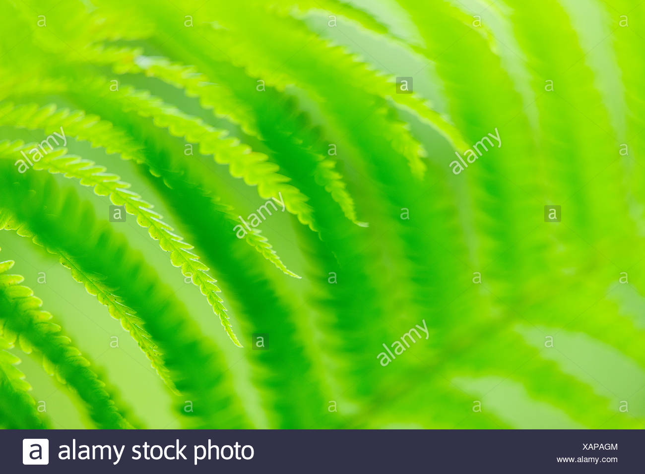 Detail of fern leaves - Stock Image
