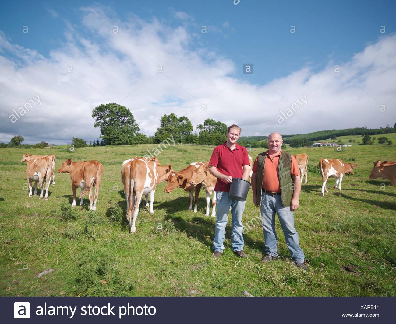 Farmer and son with Guernsey calves Stock Photo