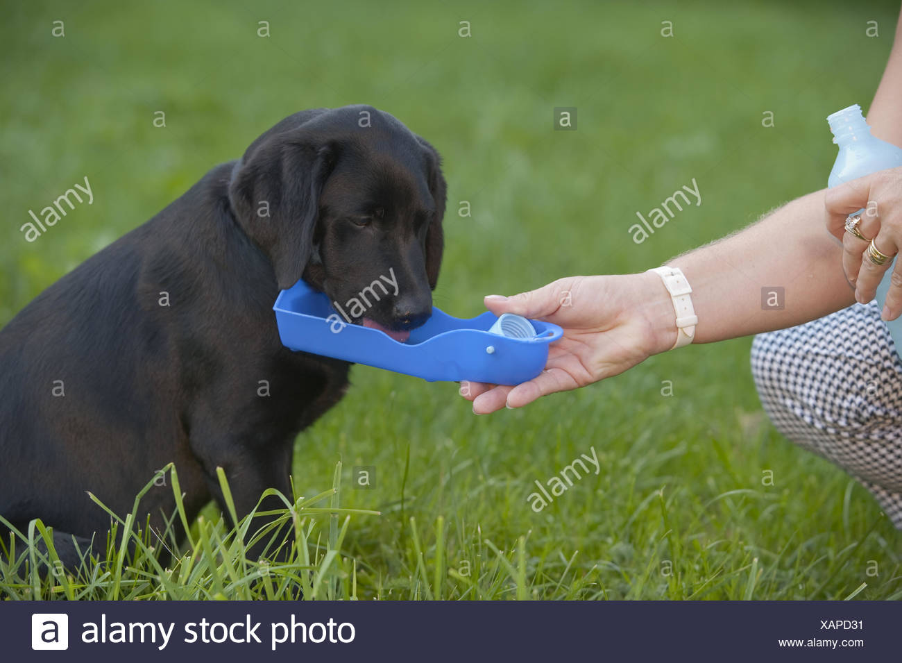 Puppy - Stock Image