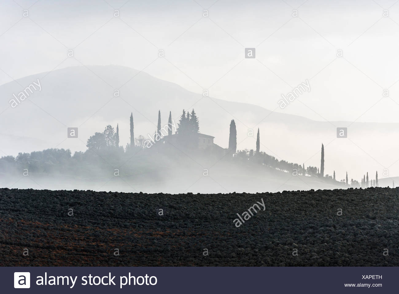 Gray Tuscany plowed land and distant cypress trees around a villa, disappearing in the mist - Stock Image