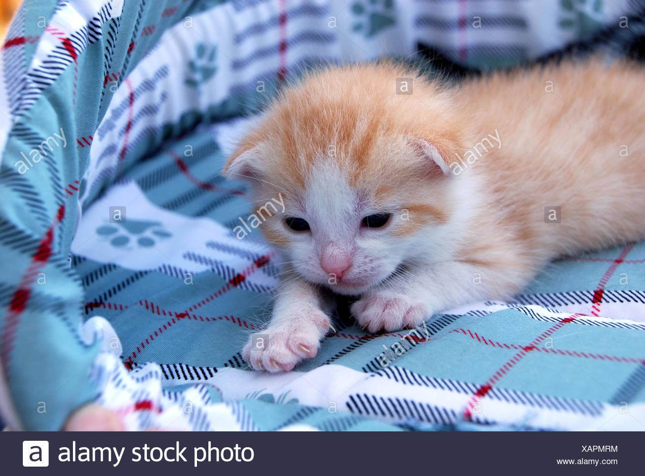 Animal Cat Baby Kitten Cute Pussycat Cat Domestic Cat Kittens