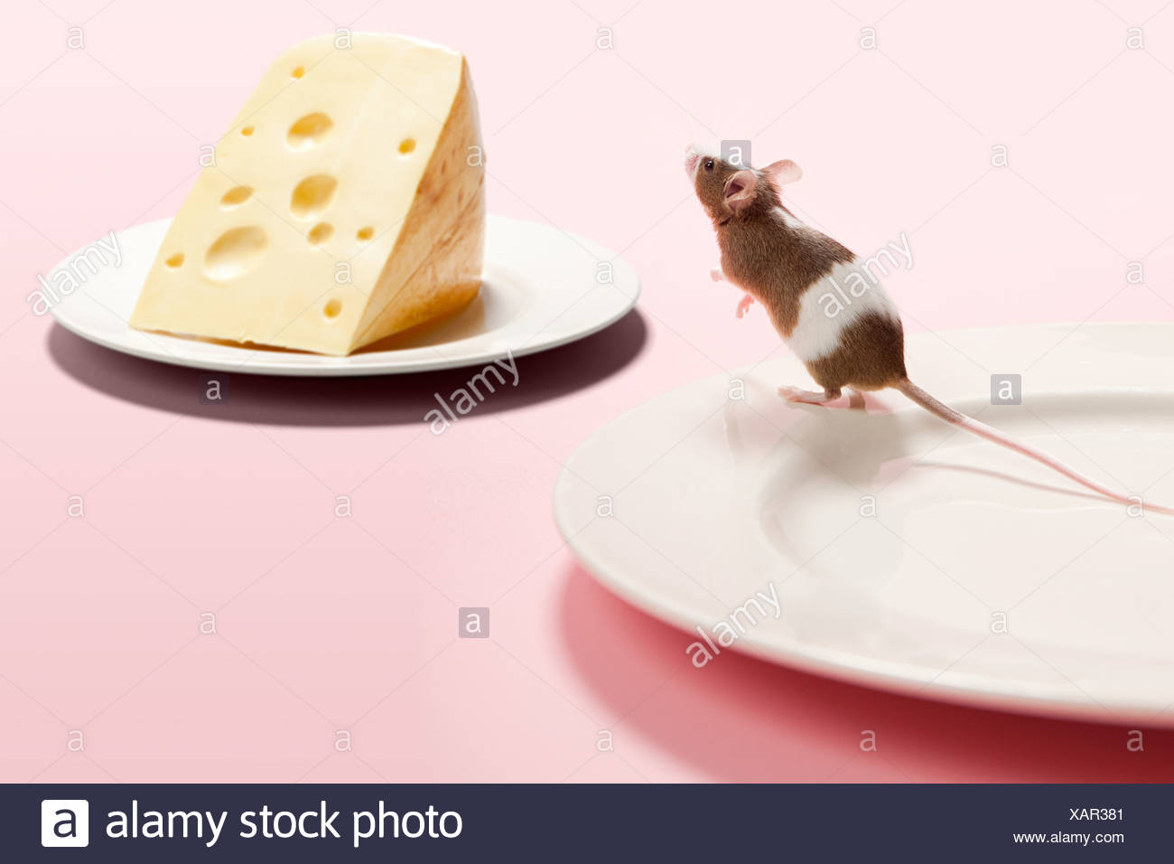 Mouse and cheese on plate - Stock Image