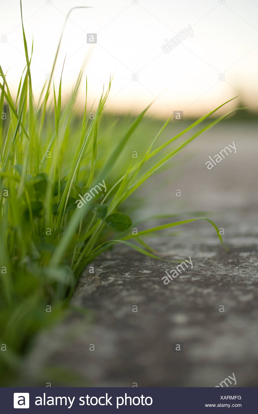 Blades of grass and concrete, close up - Stock Image