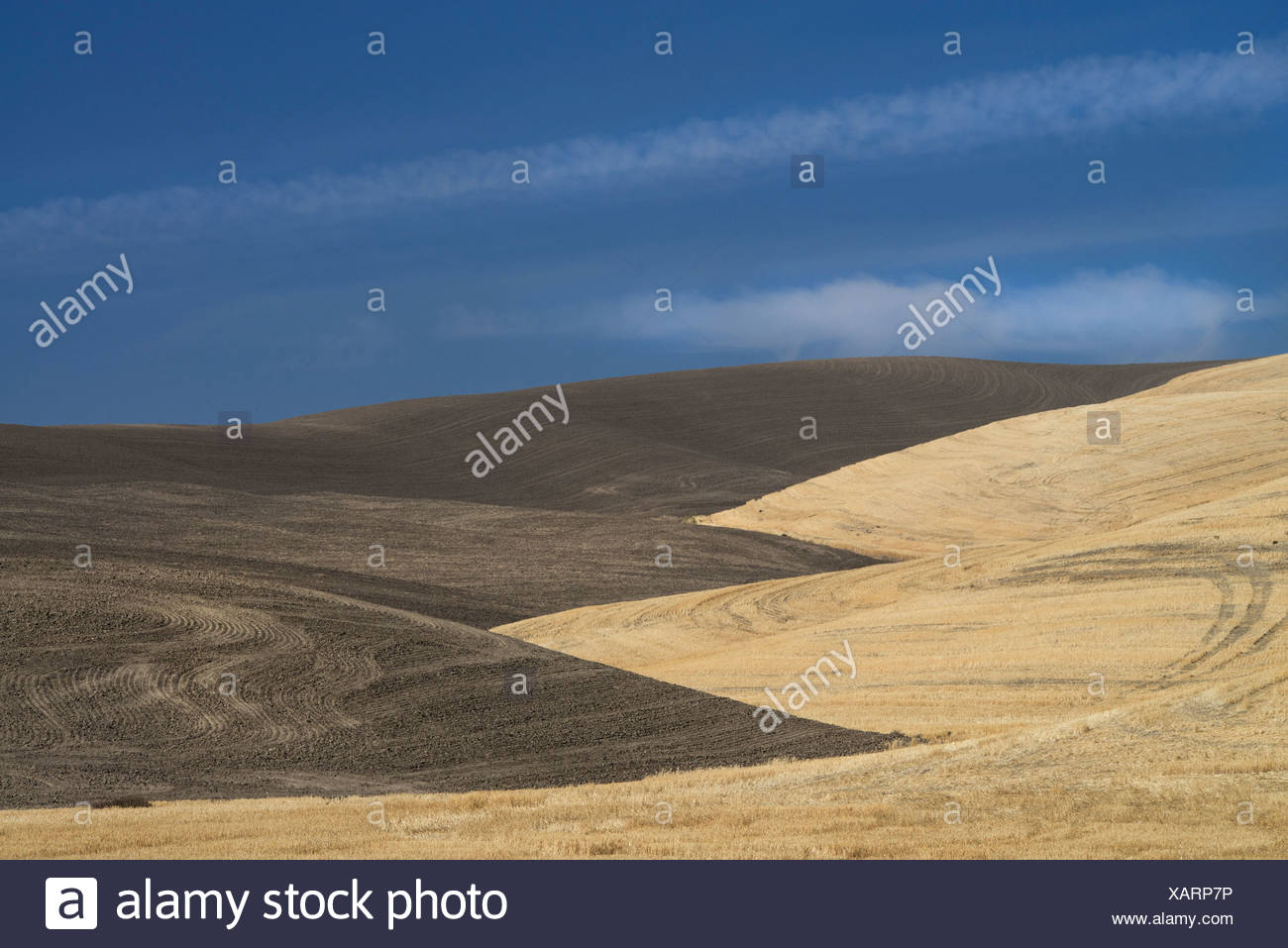 farmed land in Palouse county Washington State USA - Stock Image