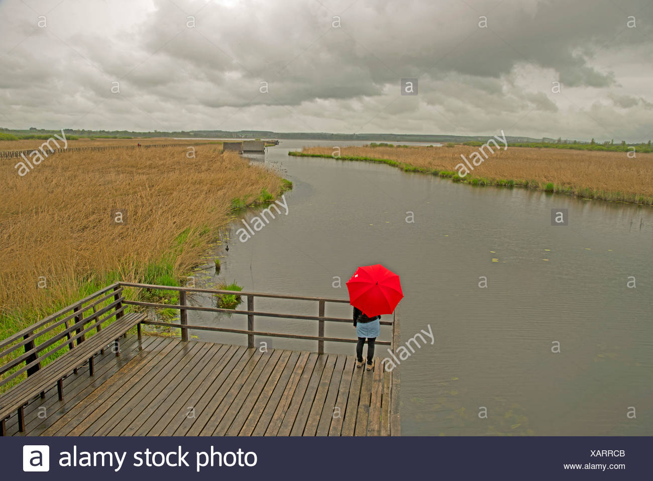 Baden Wurttemberg Biberach Germany Europe Federsee lake woman district model released nature reserve upper Swabian umbrella red Stock Photo