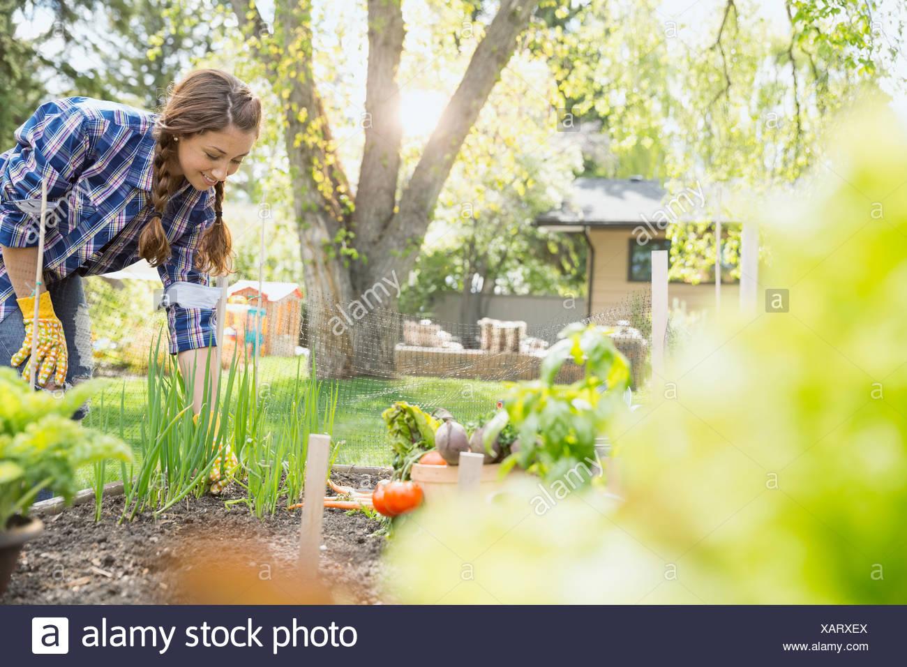 Woman tending to vegetable garden - Stock Image