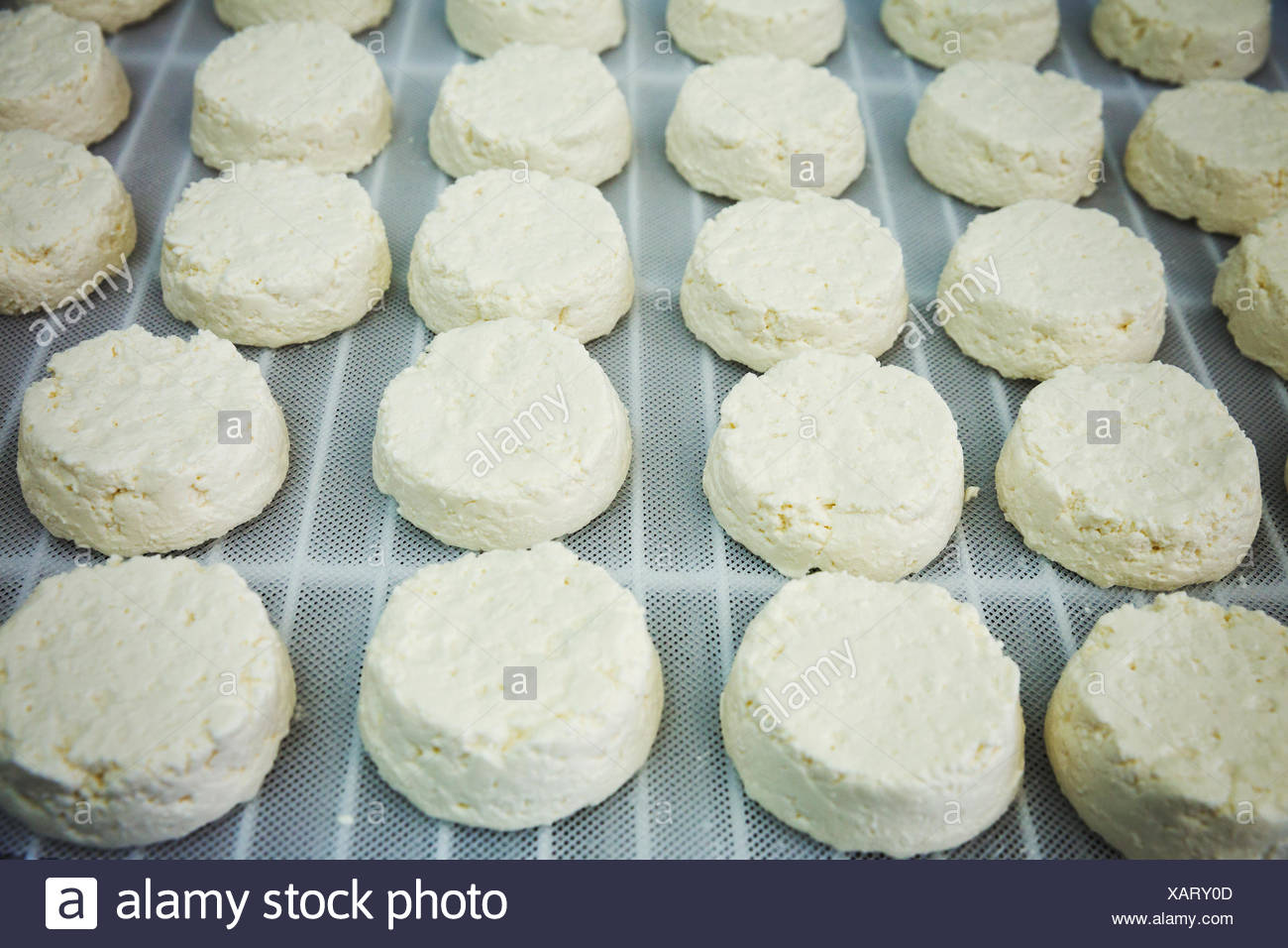 Close up of fresh goats cheeses in a creamery. - Stock Image