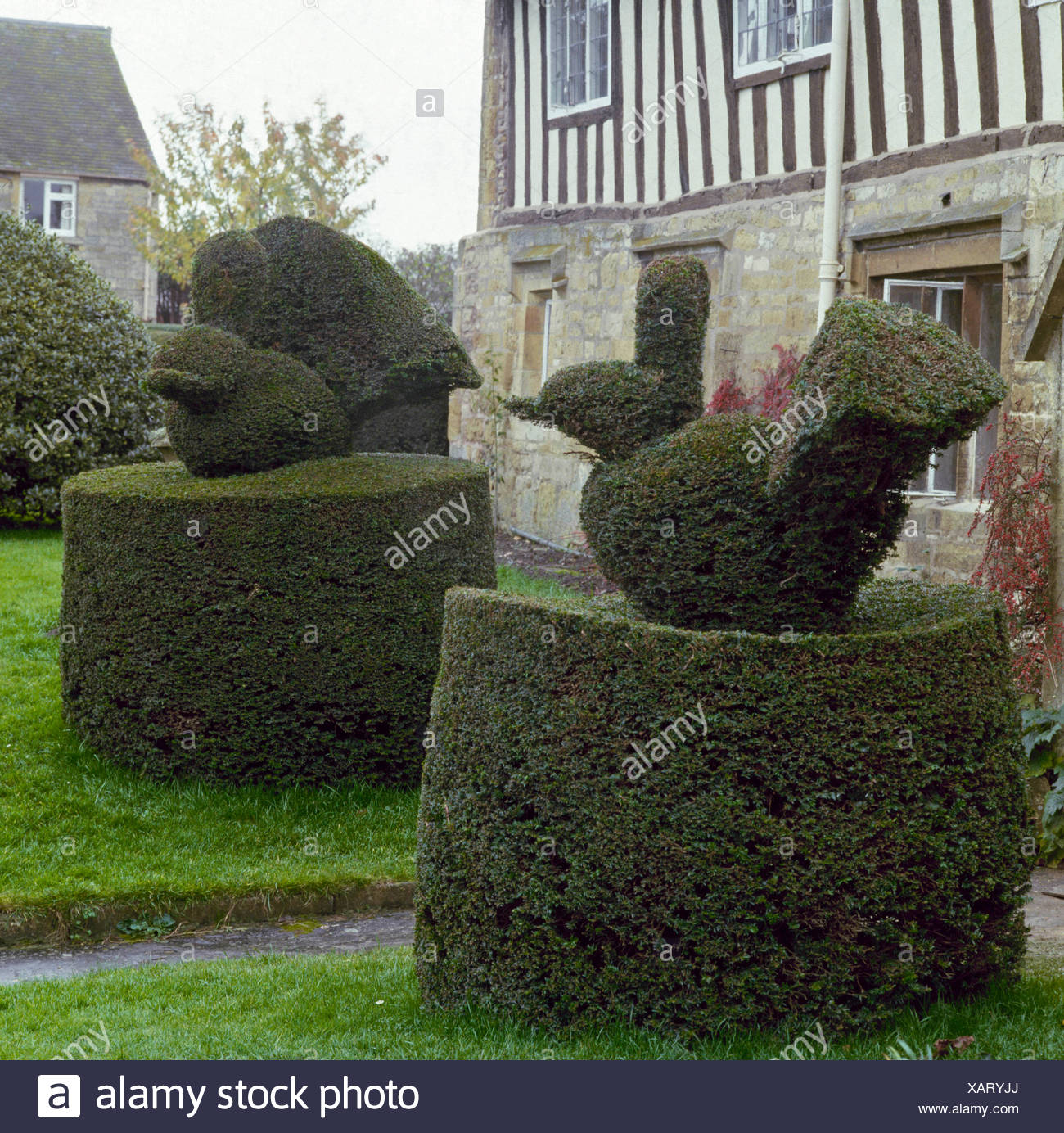 Topiary In Yew Taxus Baccata Top007101 Stock Photo Alamy