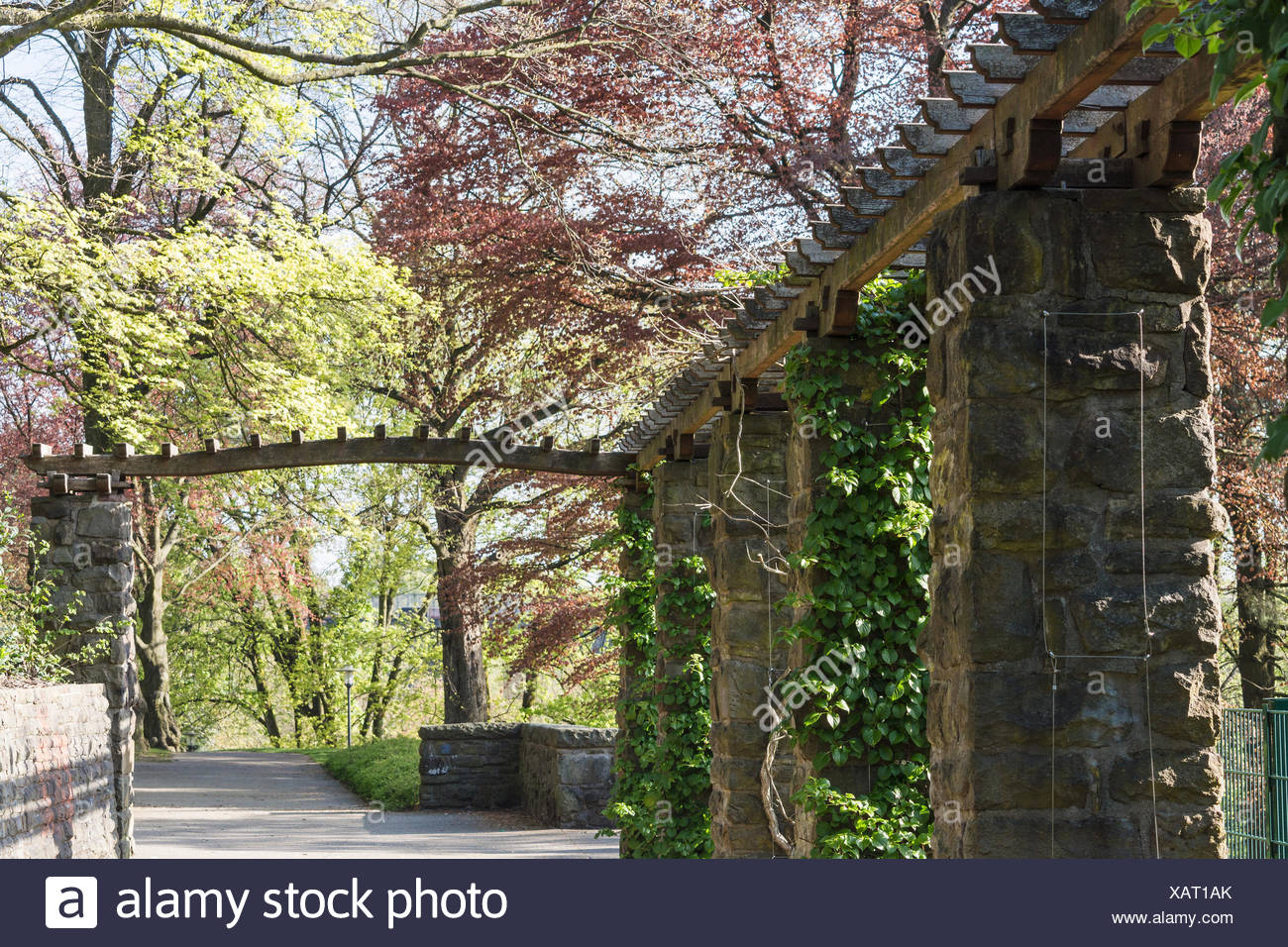 Wooden pergola covered with ivy Stock Photo   Alamy