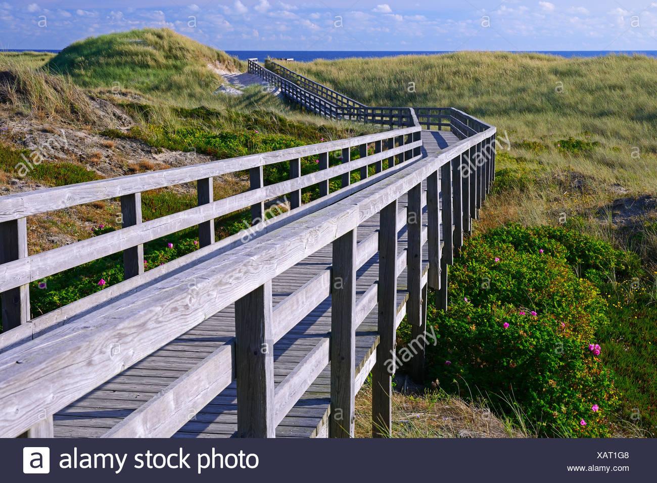 Bohlenweg durch die Duenen zum Strand von Kampen, Sylt, nordfriesische Inseln, Nordfriesland, Schleswig-Holstein, Deutschland - Stock Image