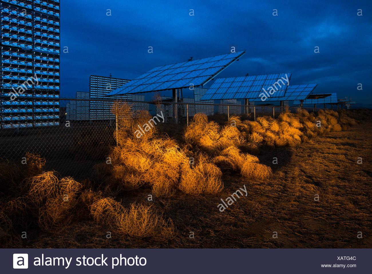 Headlights illuminate tumbleweeds piled up against a fence of solar panels. - Stock Image