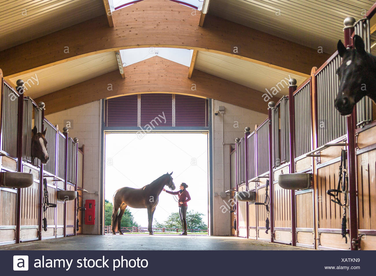 Oldenburg Horse. Bay mare with groom standing at the entrance to a spacious stable. Great Britain - Stock Image