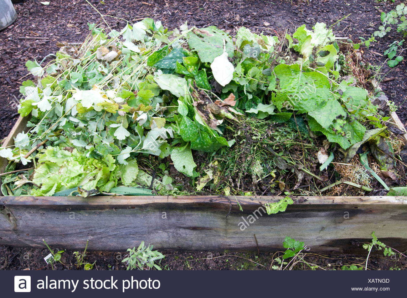 Raised bed - Stock Image