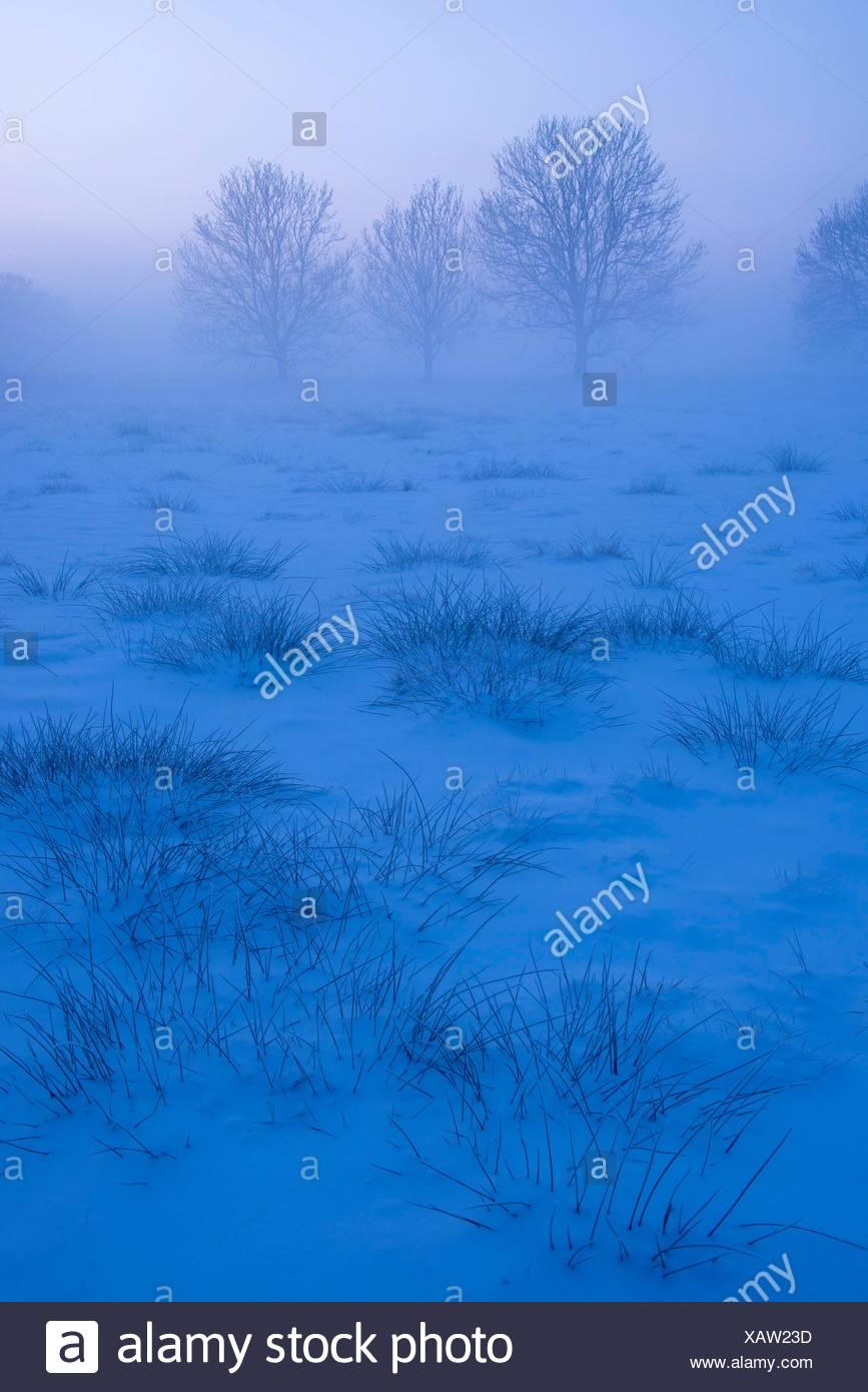 Baeume an einem nebeligen Wintermorgen, Oldenburger Muensterland, Niedersachsen, Deutschland - Stock Image