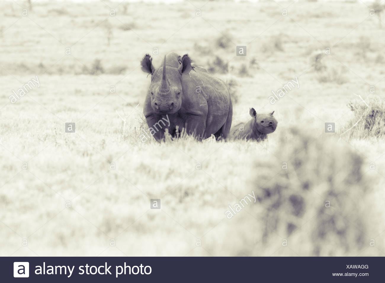 Rhino Viewer