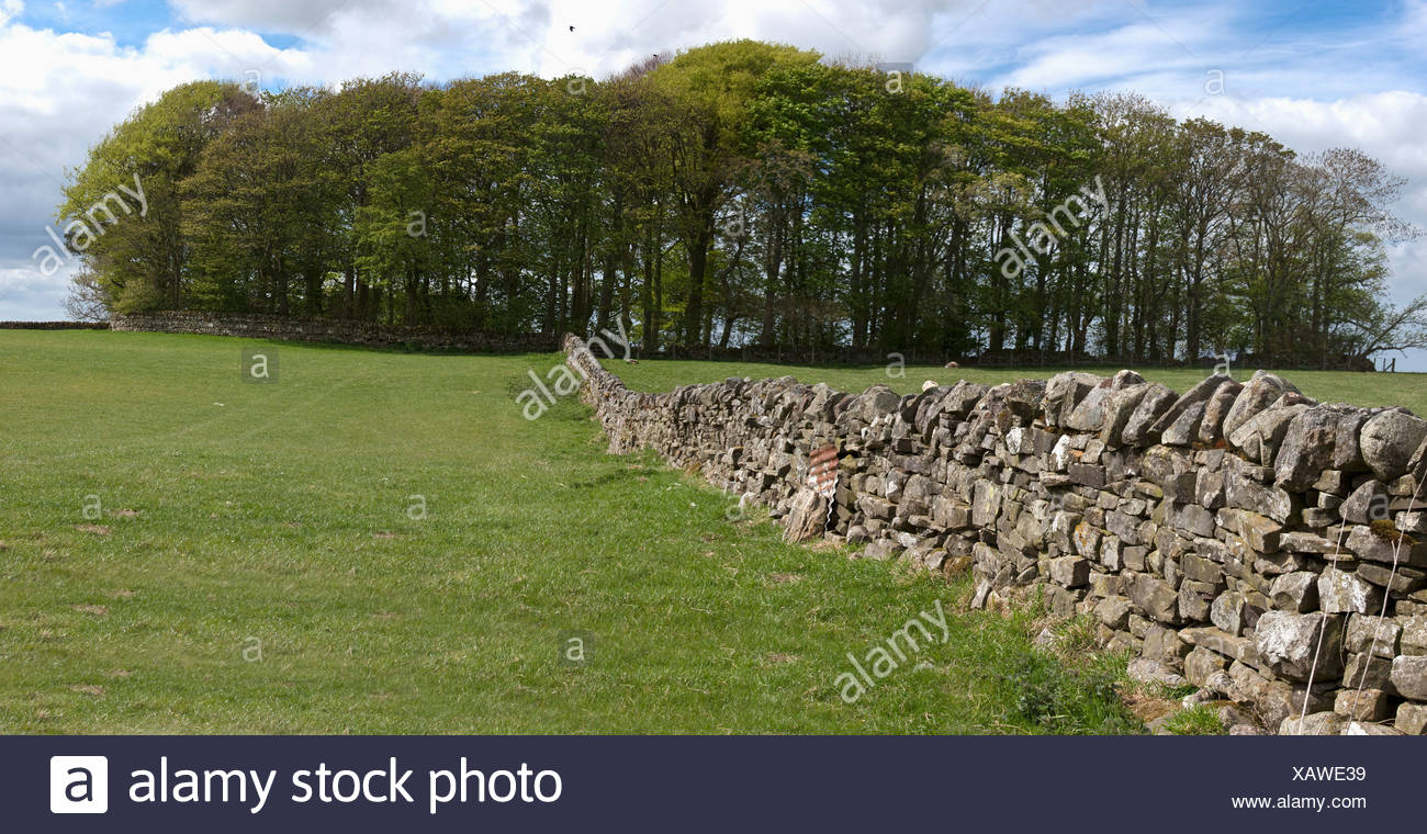 A Stone Wall In A Field; Northumberland, England - Stock Image