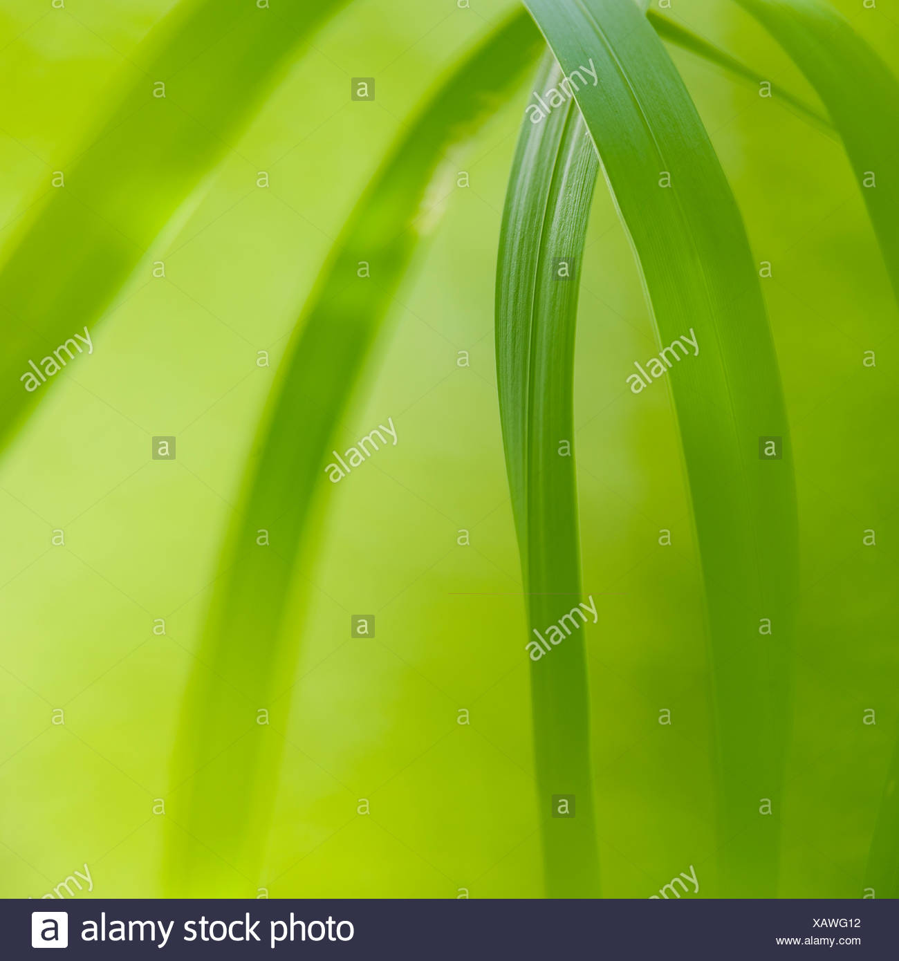 Detail of sunlit grass - Stock Image