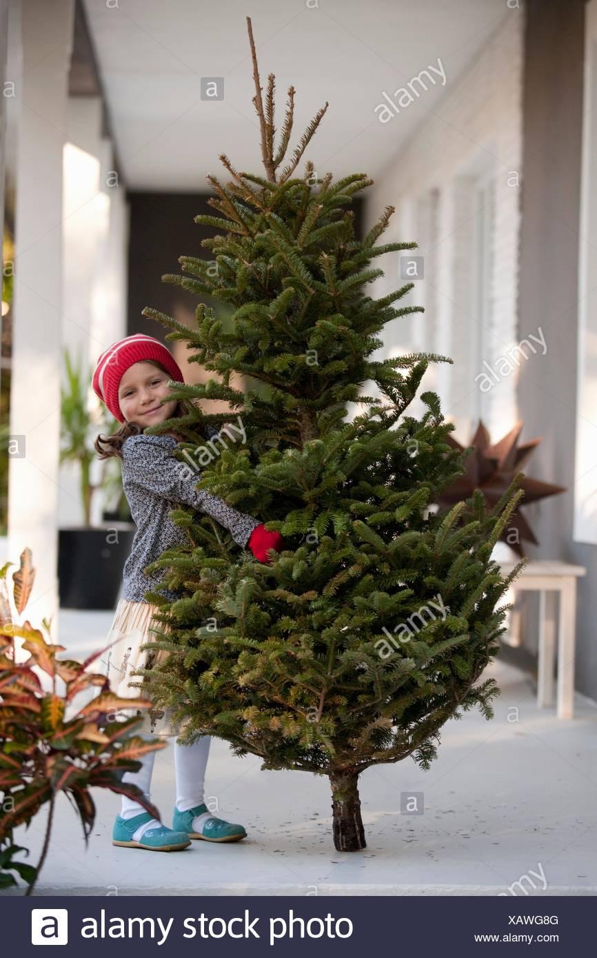 Girl carrying a christmas tree - Stock Image