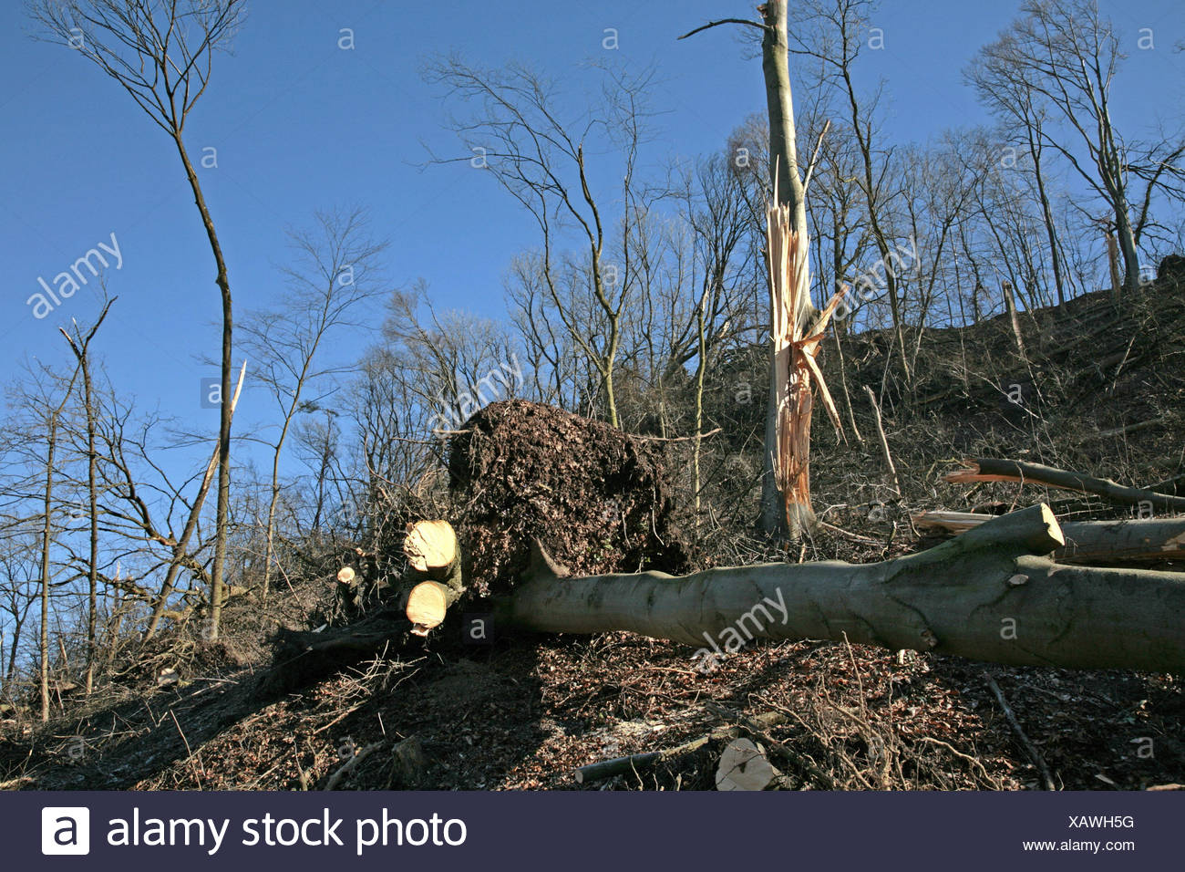Germany, Bavaria, Landshut, barrack mountain, attack damages, Upper Bavaria, wood, trunks, twigs, branches, lie, fall down uncompletedly, uproot, cyclone, wind rupture, destruction, climate changes, greenhouse effect, weather caprioles, disaster, natural disaster, - Stock Image